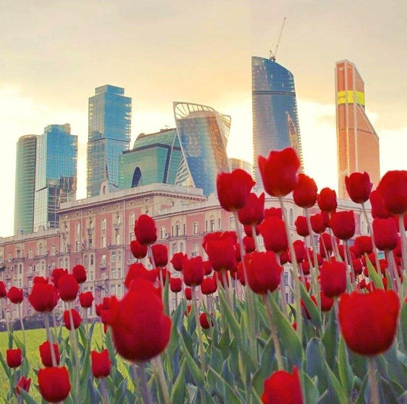 Красота и свежесть весенних тюльпанов