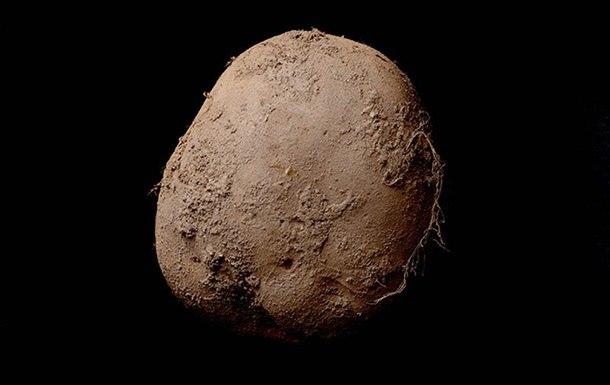 Фотография картофеля