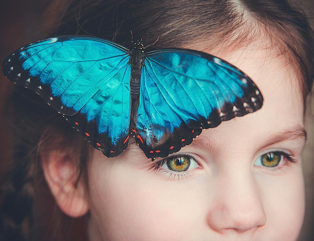 Самая редкая бабочка