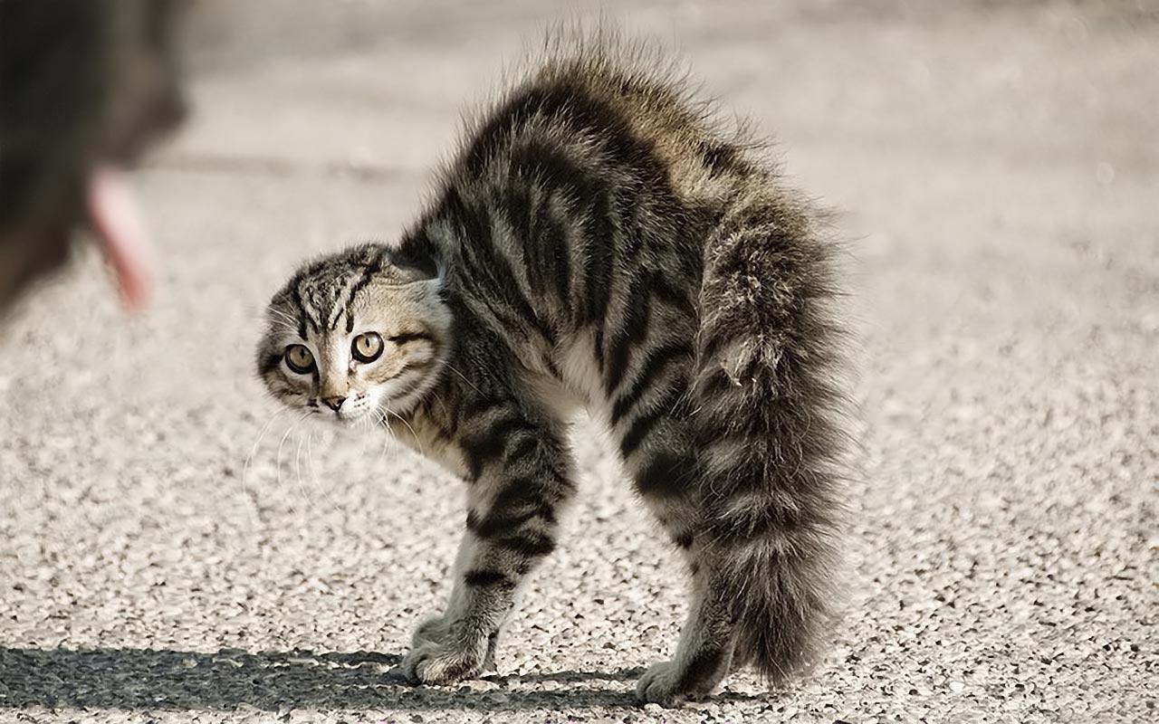 Кот встал на дыбы