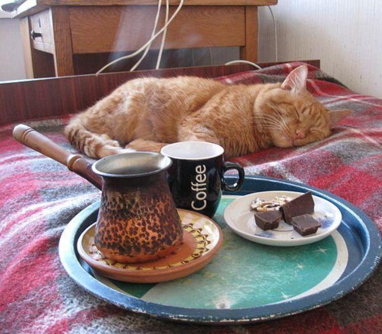 Картинки кошки доброе утро приколы картинки, пятигорске