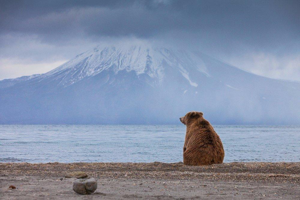 Всегда грустит один медведь