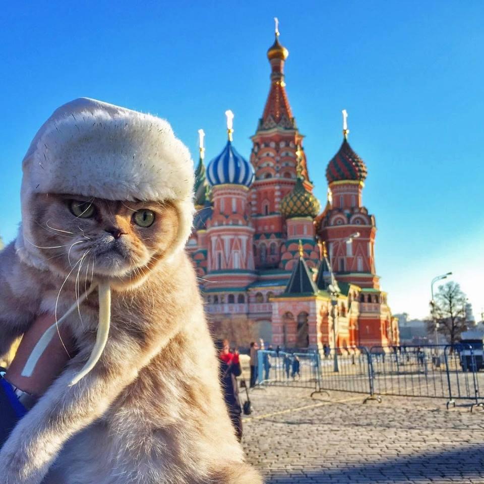 Кот на Красной площади