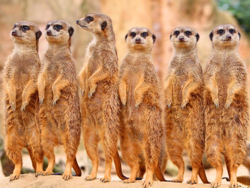 Прикольная картинка группы животных, рисунки