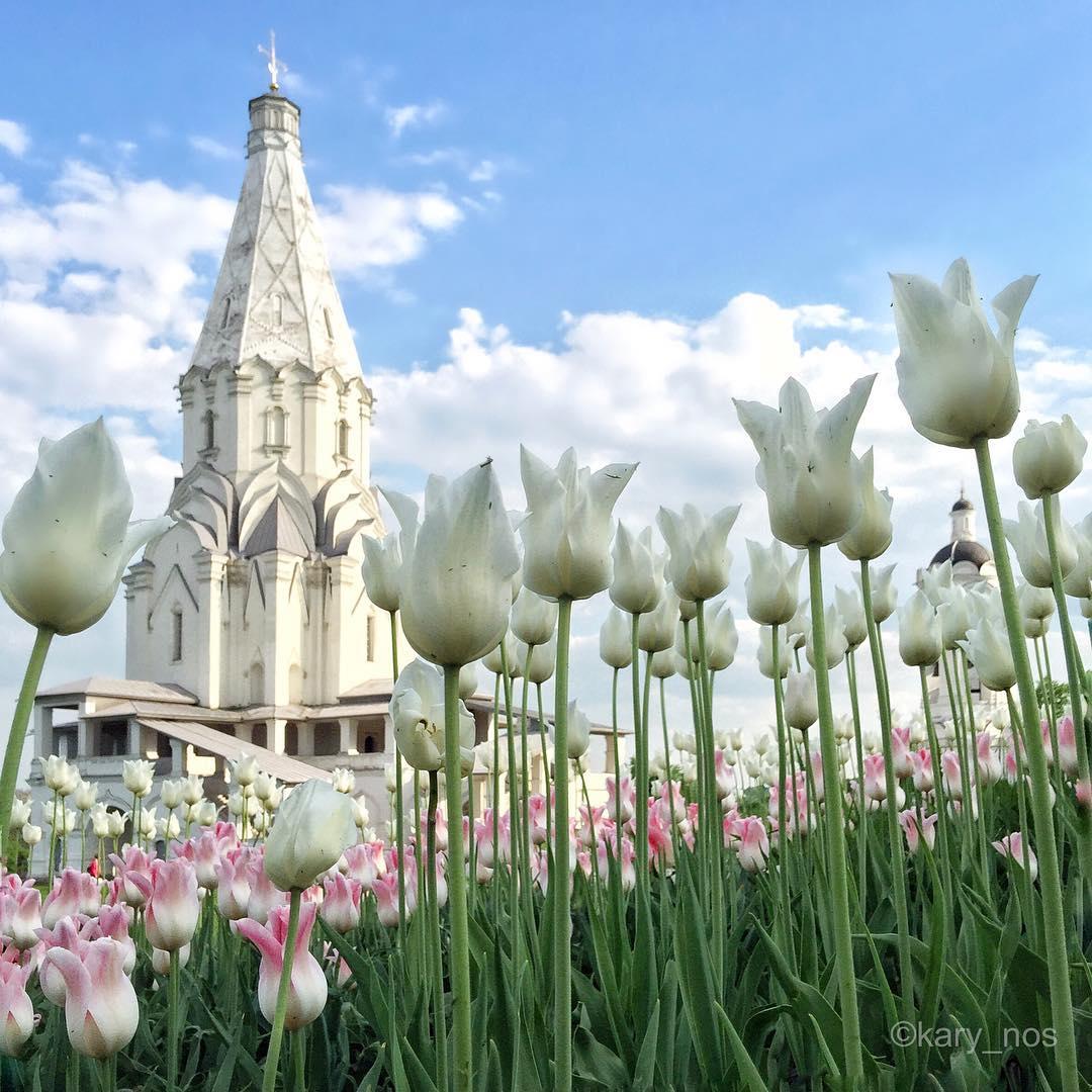 Нежность весенних тюльпанов